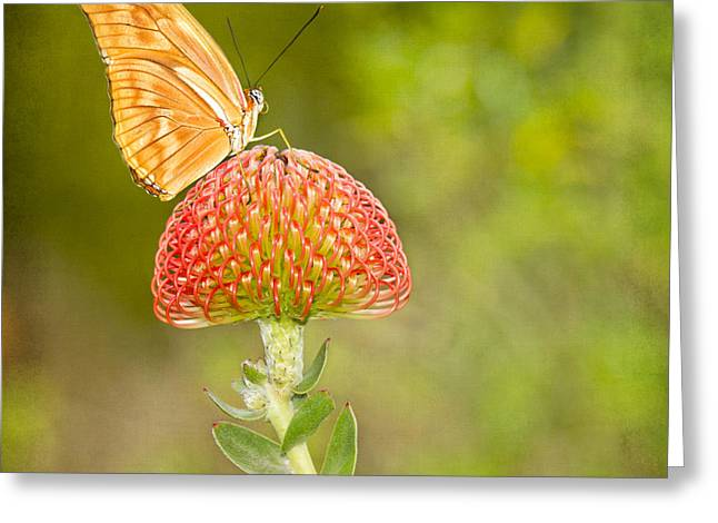 Julia Longwing Butterfly On Exotic Flower Greeting Card