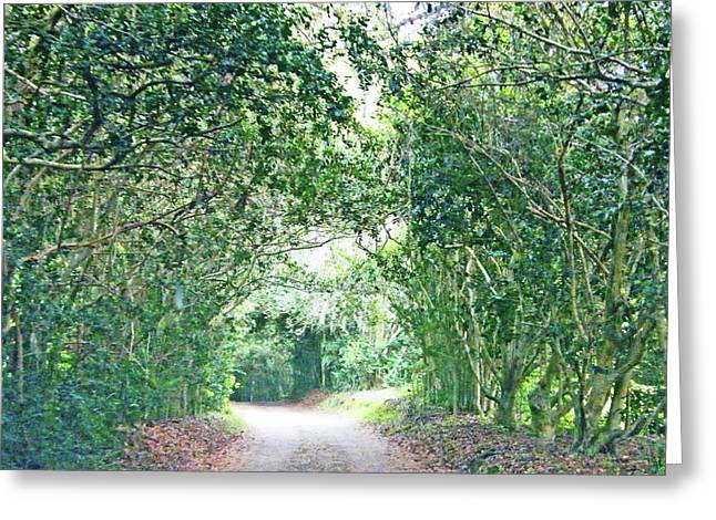 Greeting Card featuring the photograph Jungle Drive Avery Island La by Lizi Beard-Ward