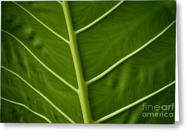 Jungle Leaf Greeting Card
