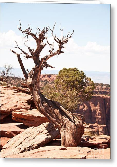 Juniper - Colorado National Monument Greeting Card by Bob and Nancy Kendrick