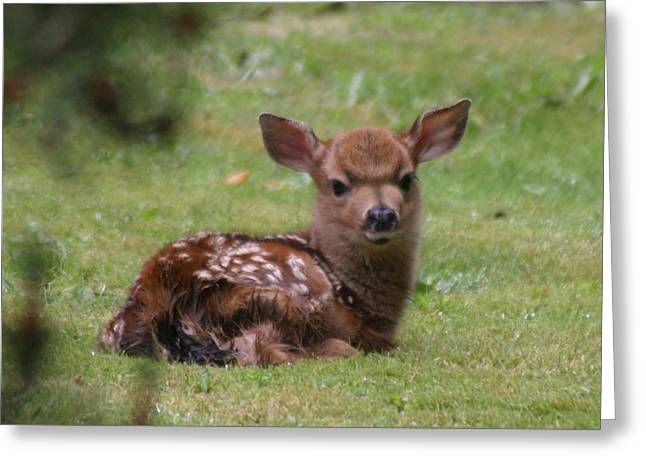 Just Born Bambi Greeting Card by Kym Backland