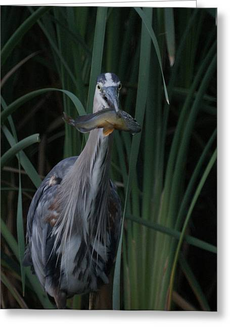 Just For You Greeting Card by Ernie Echols