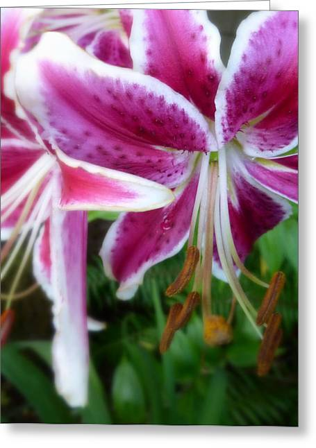 Just Hangin' Around Tiger Lilies Greeting Card by Cindy Wright