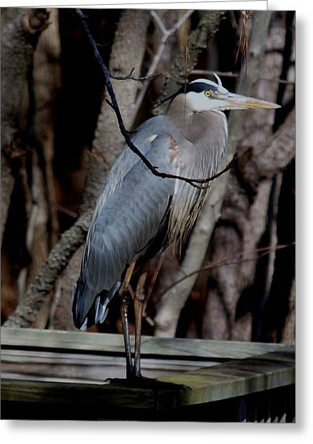 Just Hiding Out Greeting Card by Larry Krussel