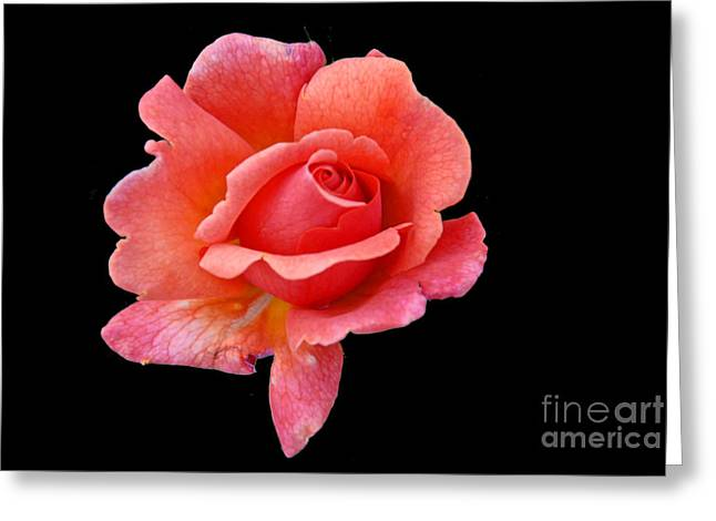 Greeting Card featuring the photograph Just Peachy by Cindy Manero