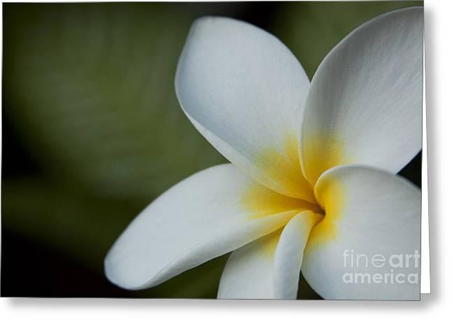 Kaena Mana I Ka Lani Kaulani Na Pua Plumeria Hawaii Greeting Card by Sharon Mau