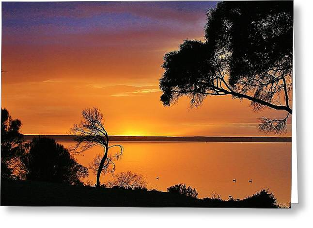 Kangaroo Island - Sunrise Greeting Card by David Barringhaus