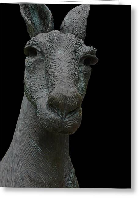 Kangaroo Smith Close On Black Greeting Card by Gregory Smith