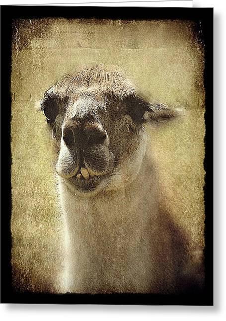 Karma Llama Greeting Card by Julie Williams