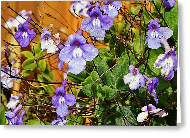Kathy's Violets From Australia Greeting Card