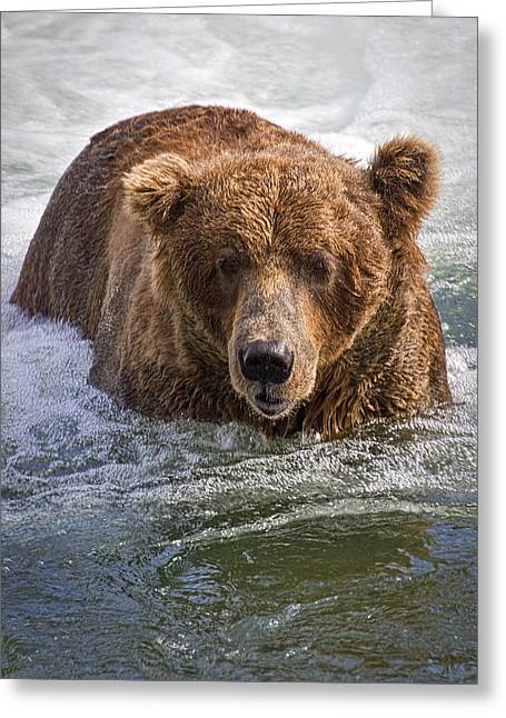 Katmai Bear Greeting Card