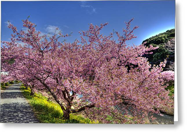 Kawazu Sakura-1 Greeting Card