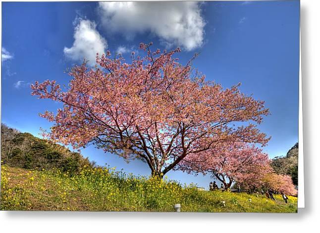 Kawazu Sakura-ii Greeting Card by Tad Kanazaki