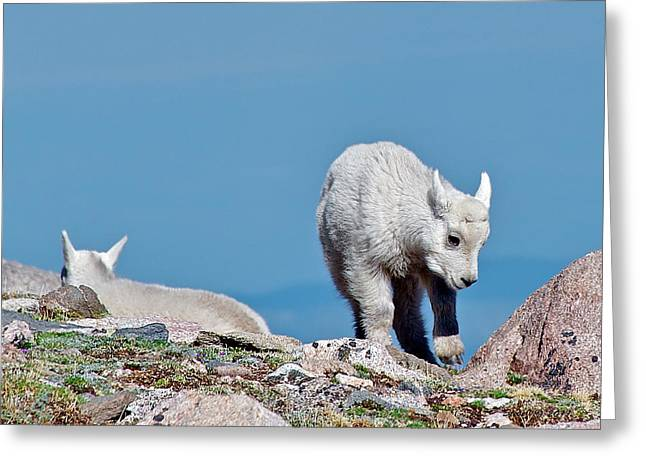 Greeting Card featuring the photograph Kids On The Tundra by Stephen  Johnson
