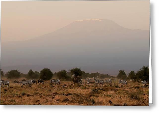 Kilimanjaro Dusk Greeting Card by Joe Bonita