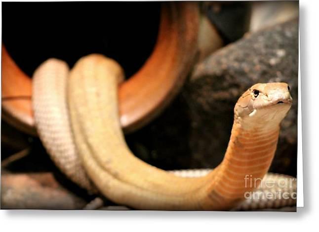 King Cobra Greeting Card by Megan Wilson