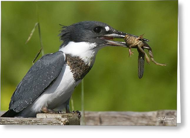 King Fisher Lunch Greeting Card