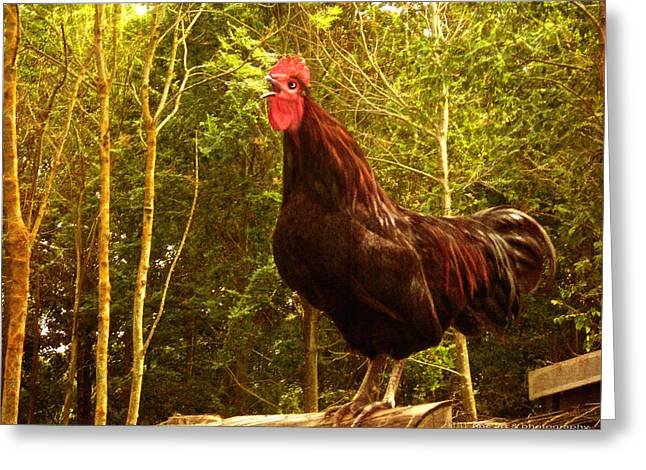King Of The Barnyard - Rooster Greeting Card by Yvon van der Wijk