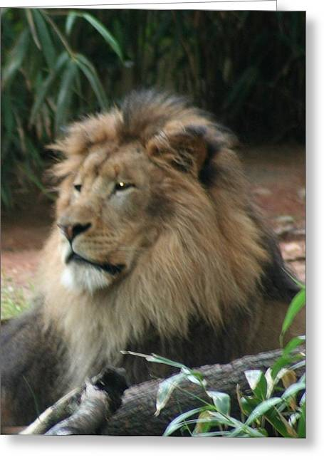 King Of The Pride Greeting Card by Debi York