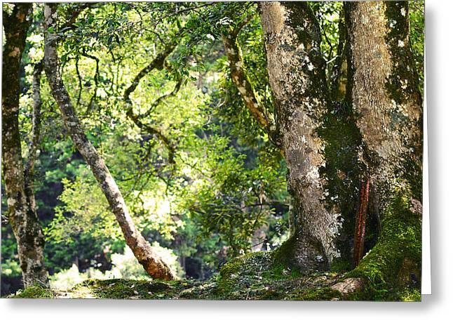 Kingdom Of The Trees. Peradeniya Botanical Garden. Sri Lanka Greeting Card by Jenny Rainbow