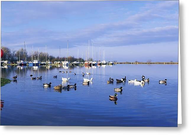 Kinnego Marina, Lough Neagh, Co Antrim Greeting Card