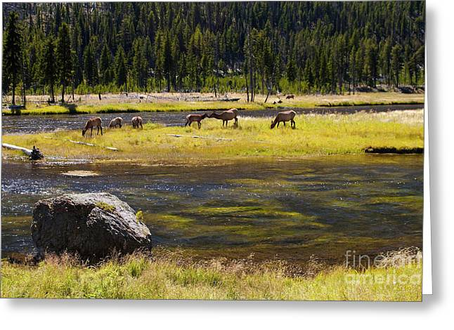 Kissing Elk Greeting Card by Keith Kapple