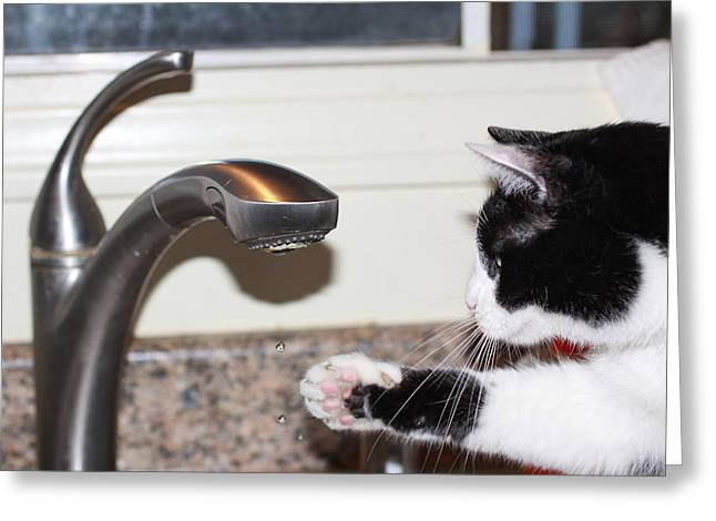 Kitchen Faucet Greeting Card