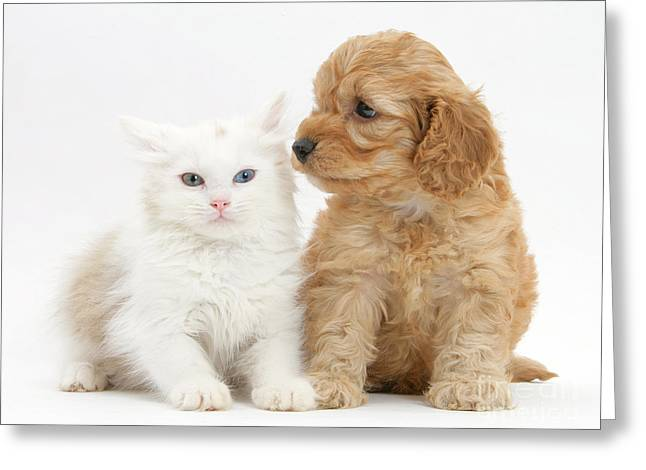 Kitten And Cockatoo Pup Greeting Card by Mark Taylor