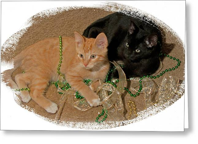 Kitten Brothers Greeting Card by Judy Deist