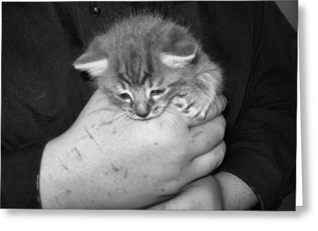 Kitten Frenzy Love Greeting Card by Juliana  Blessington