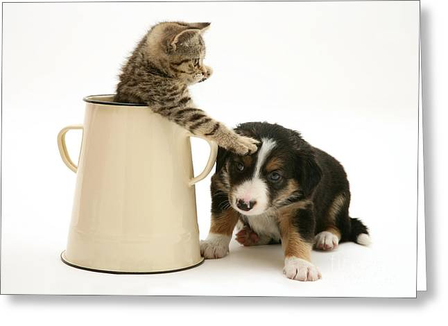 Kitten In Pot With Pup Greeting Card by Jane Burton
