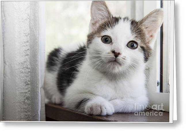 Kitten In The Window Greeting Card
