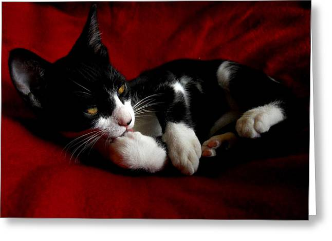 Kitten On Red Take Two Greeting Card by Maggy Marsh