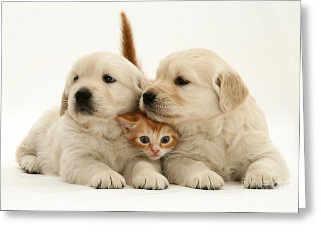 Kitten With Puppies Greeting Card