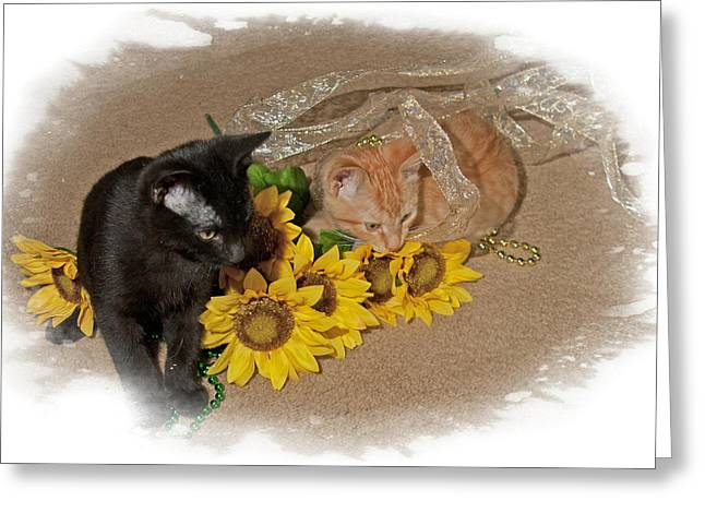 Kittens And Sunflowers Greeting Card by Judy Deist