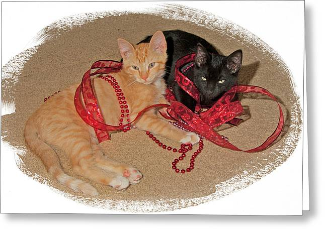 Kittens Ribbons And Beads Greeting Card by Judy Deist