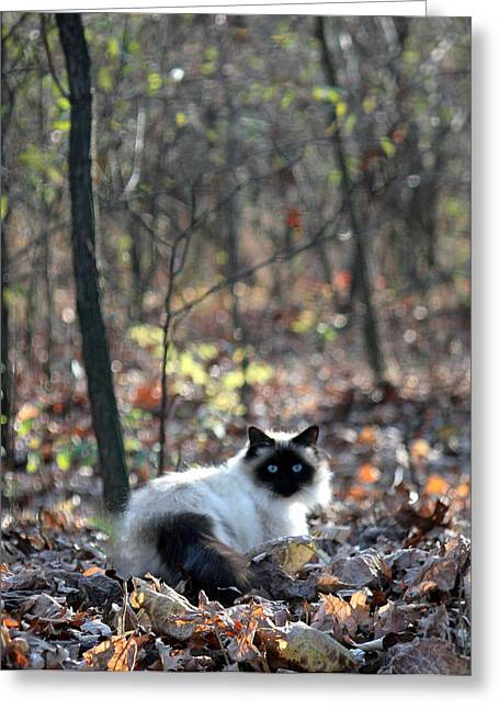Kitty And Bokeh Greeting Card by Penny Hunt