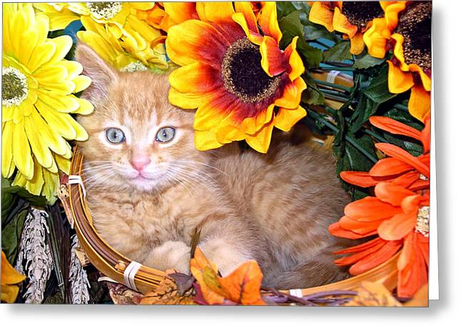 Kitty Cat Lost In Thought - Cute Kitten With Blue Eyes Relaxing In A Flower Basket - Fall Season Greeting Card by Chantal PhotoPix