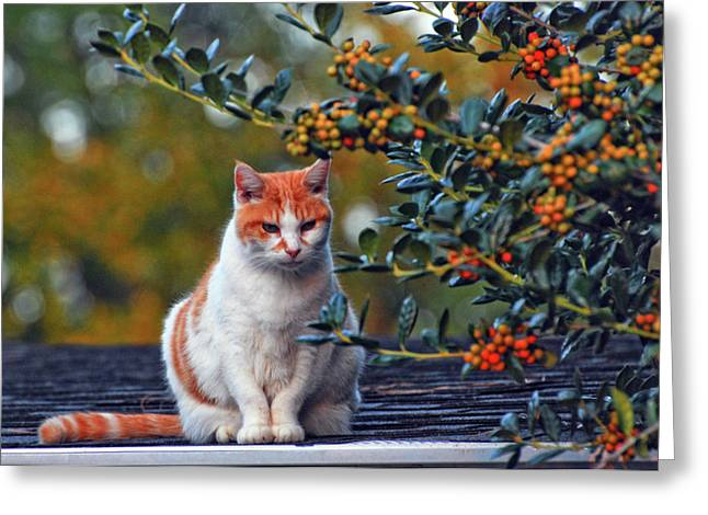 Kitty On The Roof Greeting Card by Margaret Palmer
