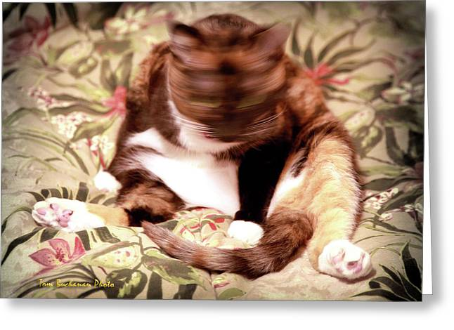 Kitty Says No Greeting Card by Tom Buchanan