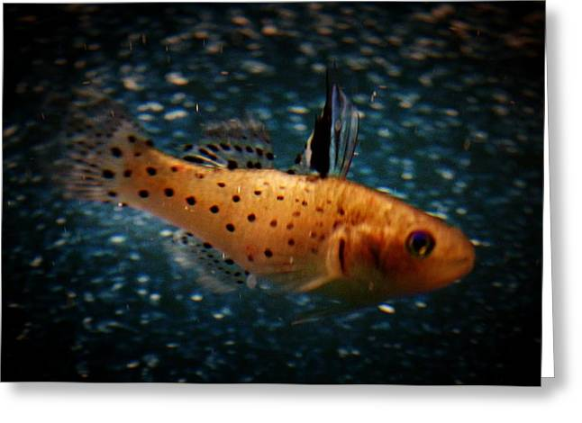 Knight Goby Greeting Card by Gerald Kloss