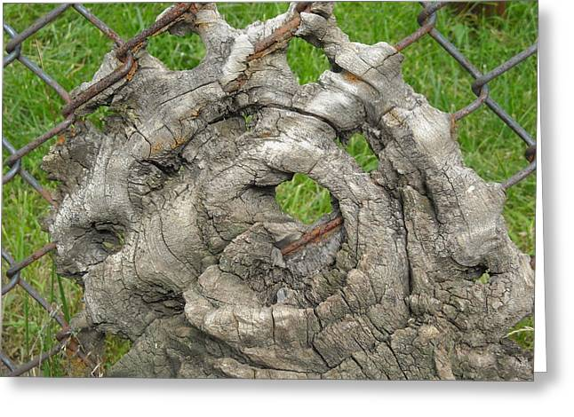 Knot In Fence 1 Greeting Card