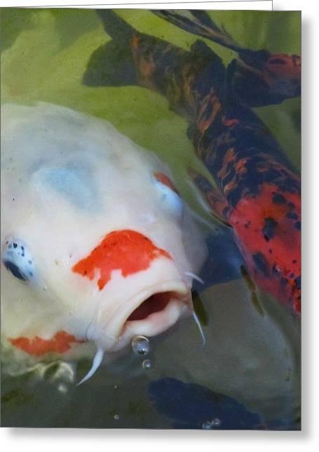Koi Fish #1 Greeting Card by Todd Sherlock