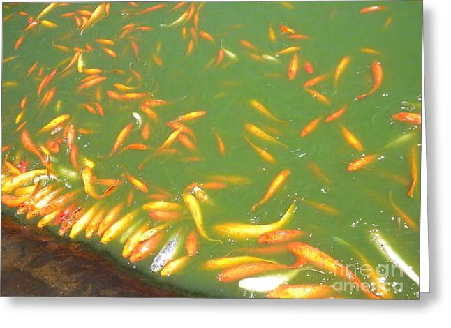 Koi Frenzy Greeting Card by Silvie Kendall