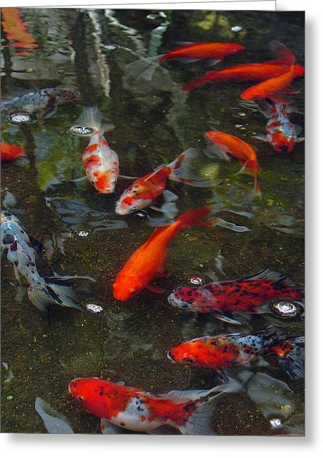 Greeting Card featuring the photograph Koi Klatch by Sandy Fisher