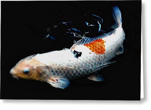 Koi Rising Greeting Card by Don Mann