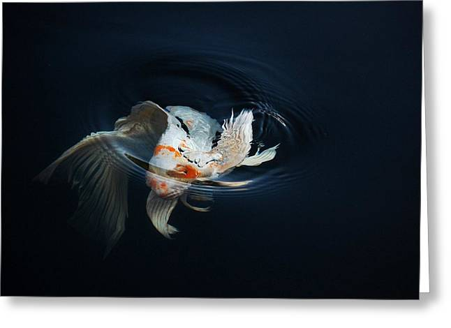Koi Rising In The Moonlight Greeting Card by Don Mann