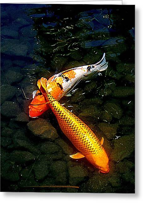 Koi Story Two C Greeting Card by Randall Weidner