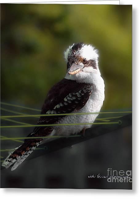 Kookaburra Hoists On The Hills Greeting Card by Vicki Ferrari