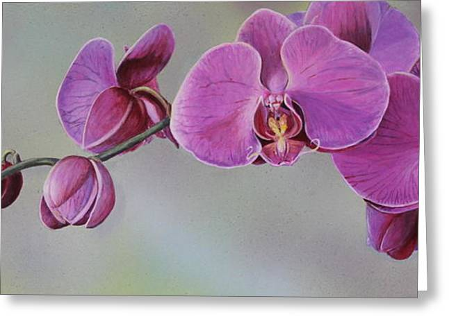 Kristin's Orchid  Greeting Card by Margit Sampogna
